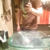 fling profile picture of Jaykawat